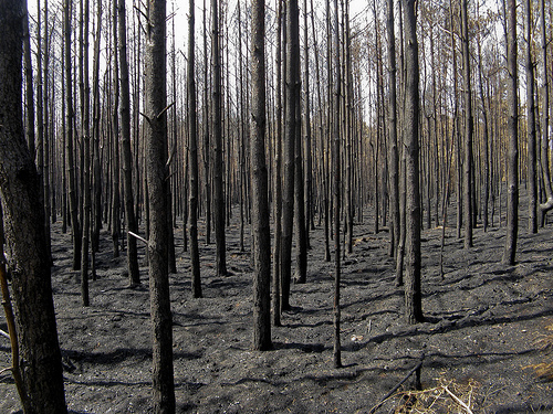 forest fires photo