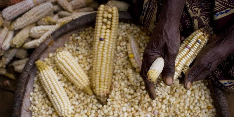 Africa_corn