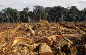 Deforestation-Amazon