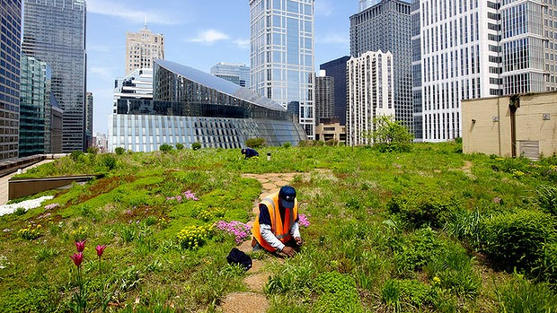 Globe Net Rooftop Gardens Could Grow Three Quarters Of City S