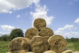 biomass straw