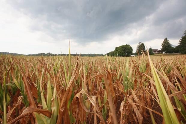 Corn belt shifting Northward with climate change