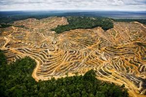 oil-palm-plantation-klum1